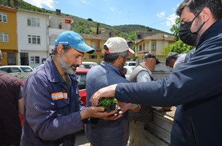 Binlerce domates fidesi Gemliklilere hediye ediliyor