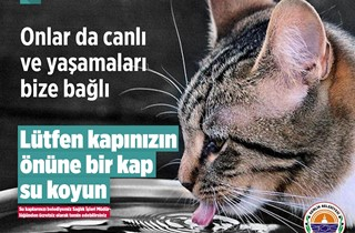 Gemlik Belediyesi sokak hayvanlarını unutmadı