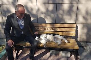 Sokak hayvanları için dev proje