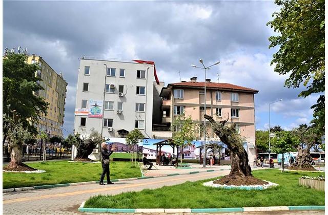 Asırlık Zeytin Ağaçları Meydanı