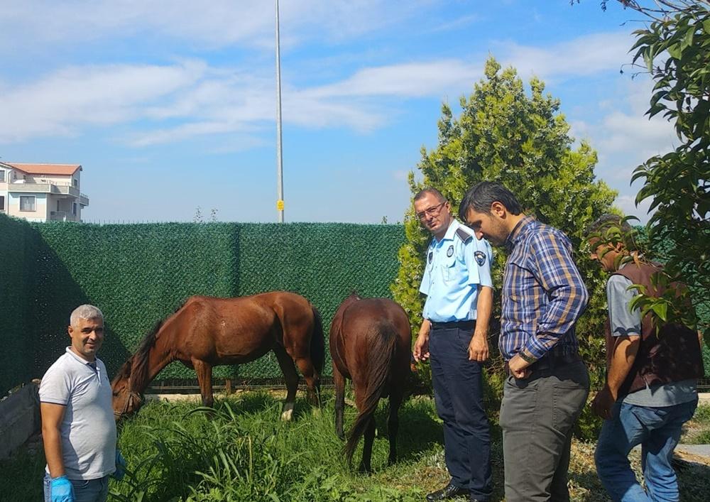 201909171647_sahipsiz-atlar-belediye-korumasında-(1).jpeg